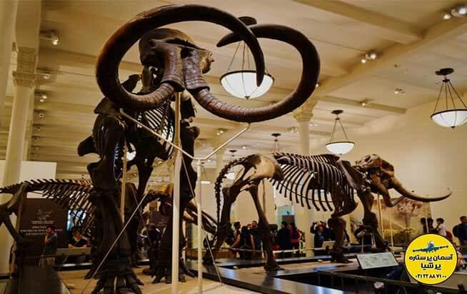 اسکلت دایناسور ها در داخل موزه