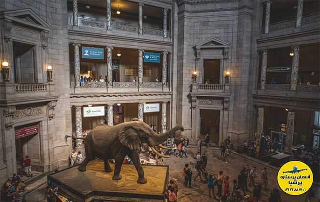 مجسمه ی فیل خاکستری