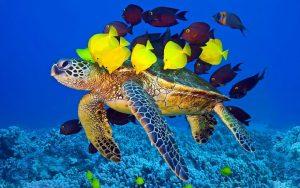 لاکپشت های دریایی 1 300x188 - لاکپشتهای دریایی کیش