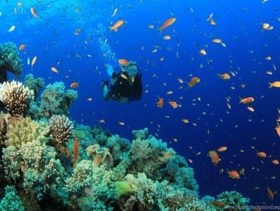 غواصی در سواحل مارماریس