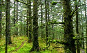 تور جنگل الیمستان، تور به سرسبزی های بکر