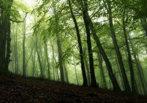 جنگل الیمستان کجاست؟