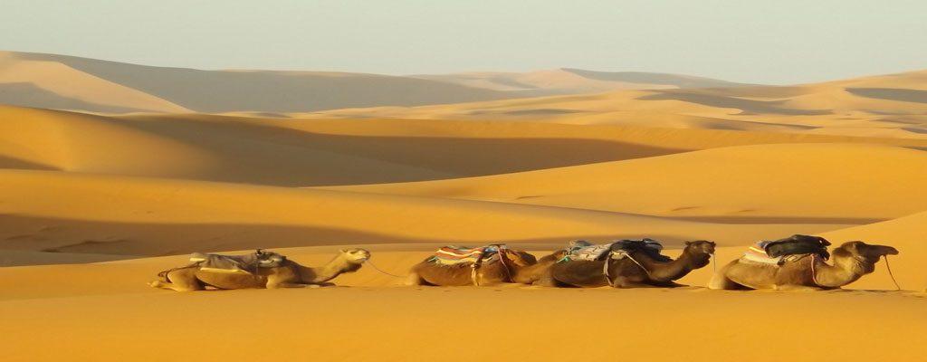 شترسواری در کویر مصر