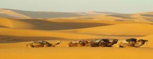 تور کویر مصر گرمه و بیاضه