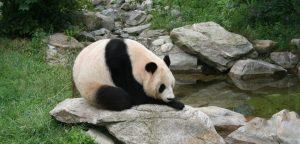 باغ وحش گوآنگجو