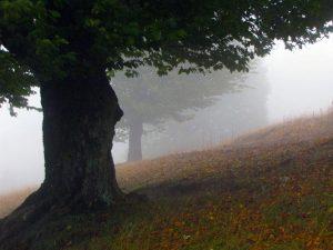 تور جنگل ابر تعطیلات خرداد