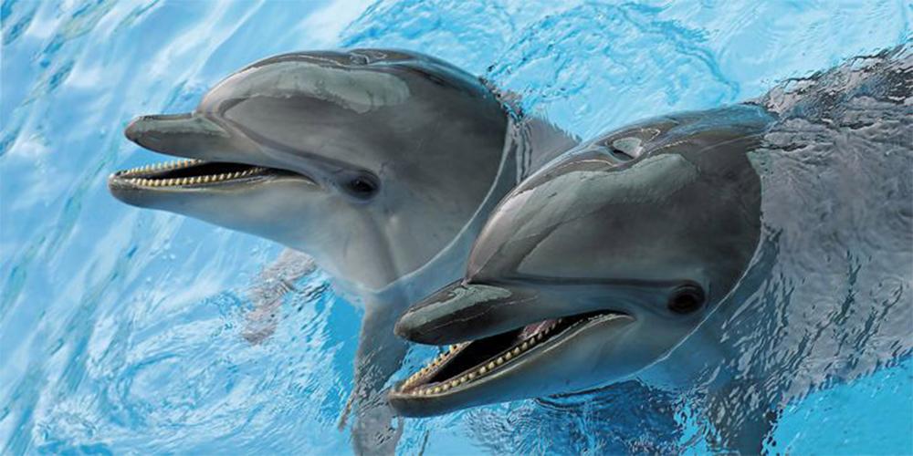 شنا با دلفین های دلفیناریوم استانبول