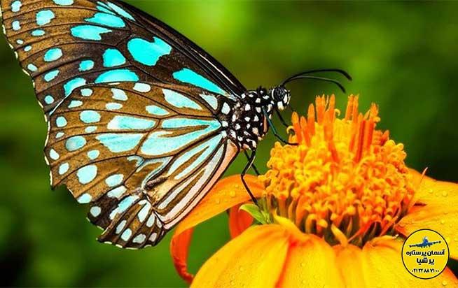 پارک پروانه ها کوالالامپور
